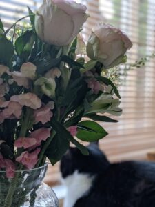 A vase of flowers in the foeground and a black and white cat in the background